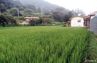 farm stay in korea. chuncheon