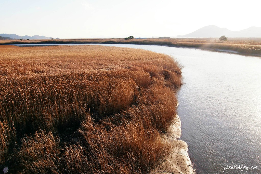 suncheon bay 2 by pheurontay
