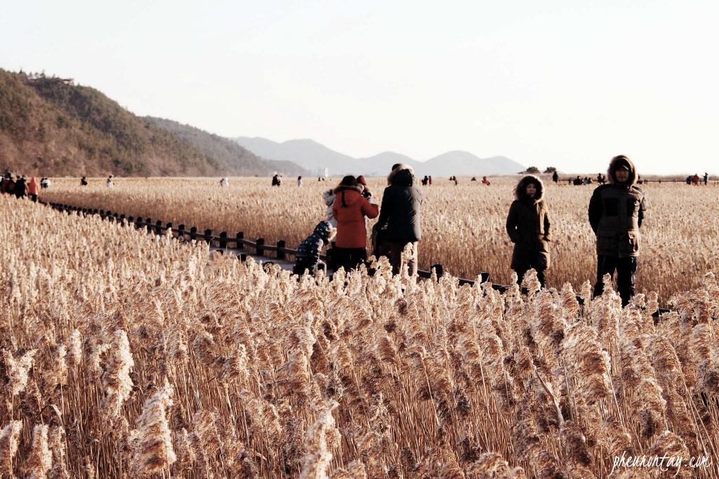 suncheon bay 6 by pheuron tay