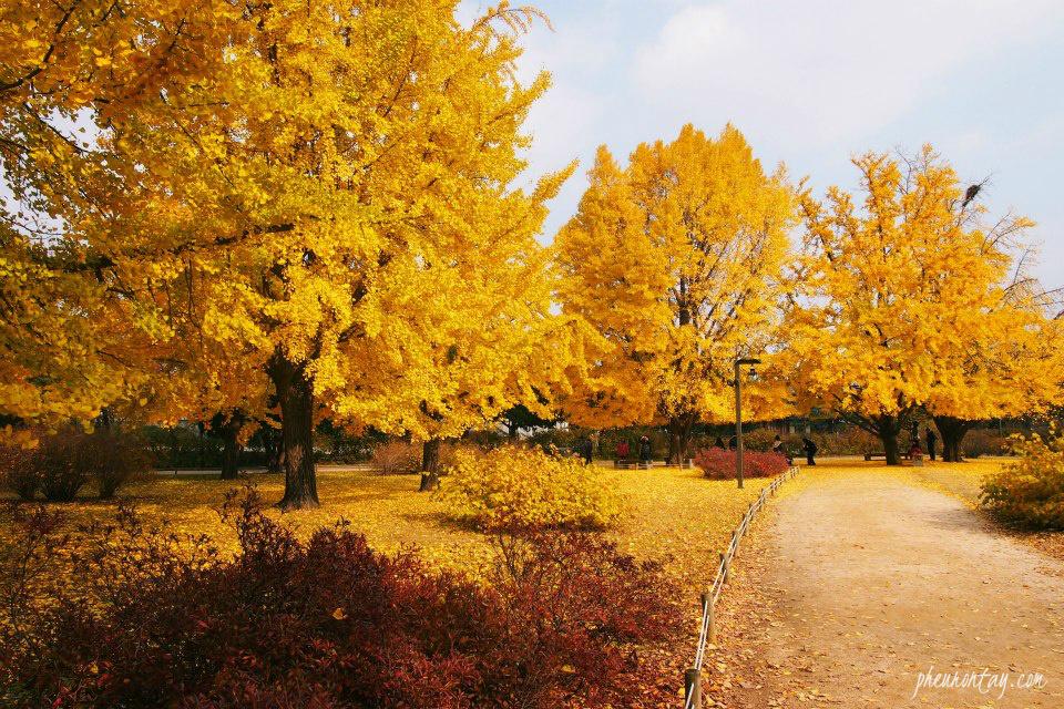 Autumn foliage at the Jagyeong-jeon.