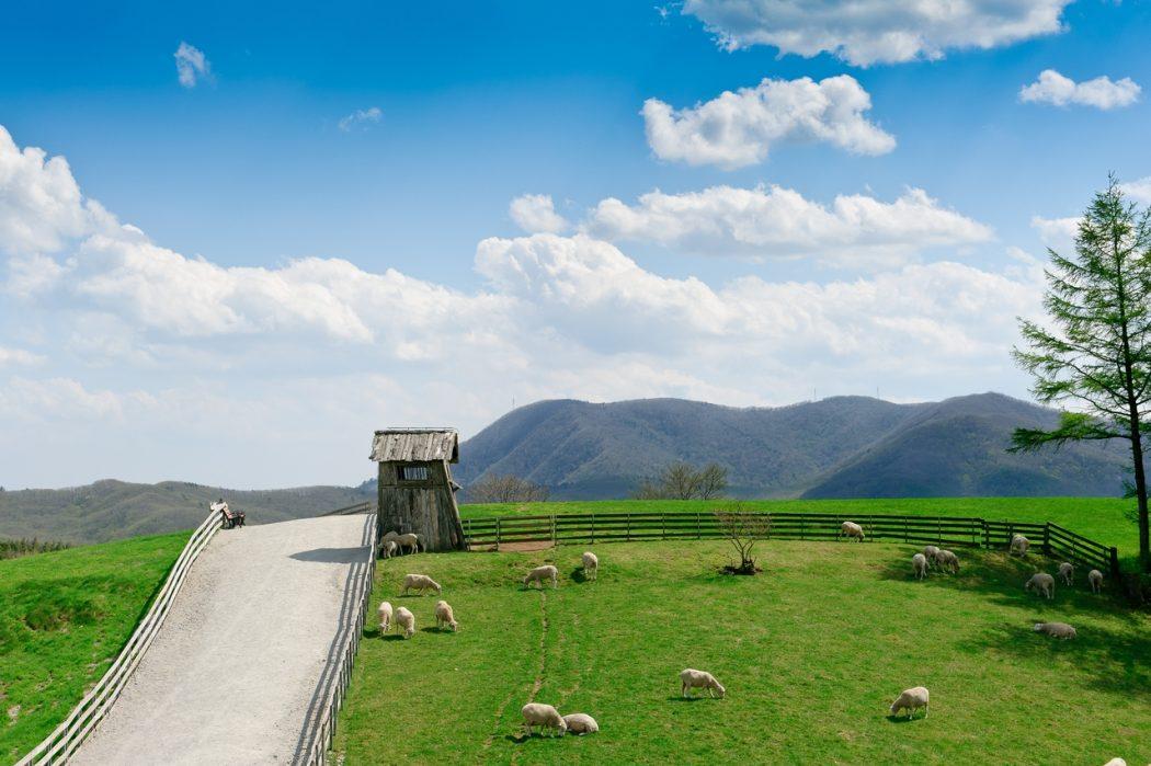DAEGWALLYEONG YANGTTE SHEEP FARM