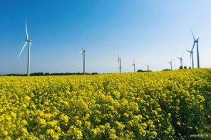 Jeju Hidden Spot: Gasiri Wind Power Plant