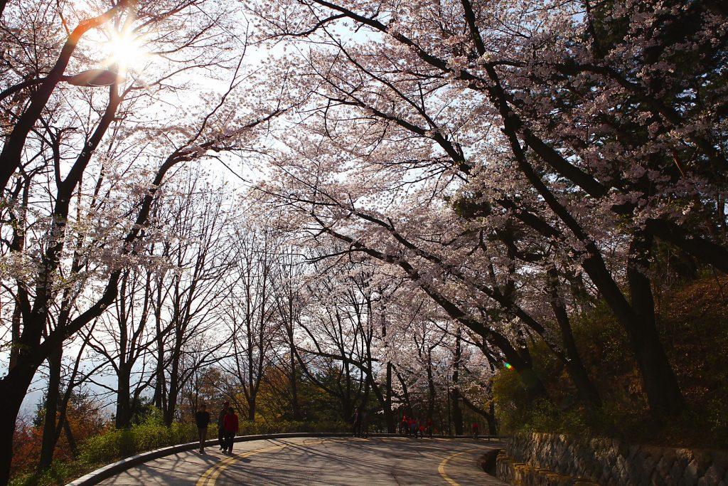Spring in Namsan.